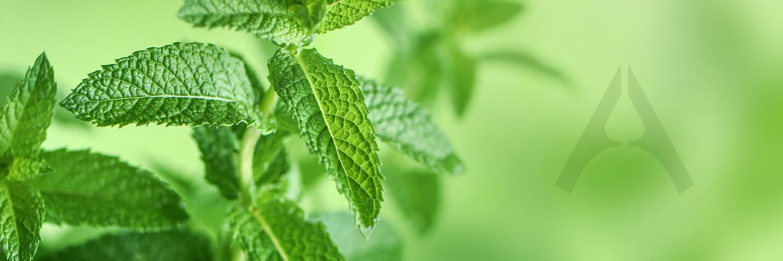 peppermint essential oil amerov