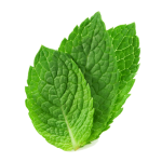 peppermint leaf devider
